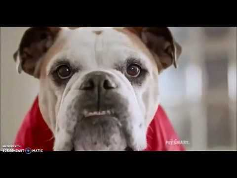 Ohio State - Michigan Cute Dog/Petsmart Commercial