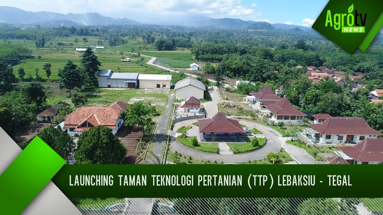 Launching Taman Teknologi Pertanian Ttp Lebaksiu Tegal Youtube