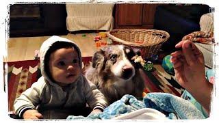 ДЕТИ И ЖИВОТНЫЕ, милая подборка   KIDS AND ANIMALS, cute compilation #582