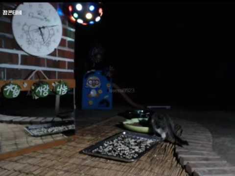 Cats Meok Bang : Stray Cats in South Korea [팝콘티비 BJ도둑고양이 나비월드]  160821 꼬로 오전5시10