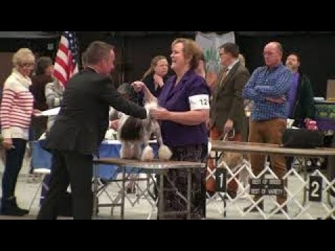 2018-03-25 Edison NJ Lowchen Breed Judging
