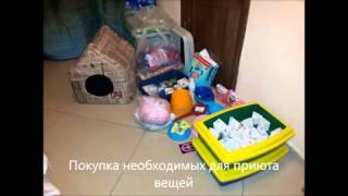 Помогать приютам для животных может каждый!