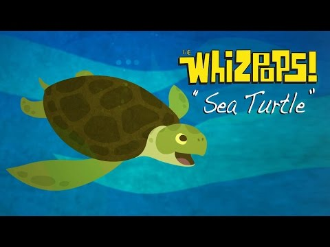 Sea Turtle by The Whizpops!