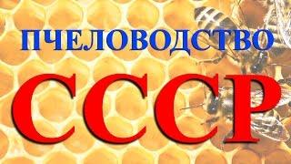 Пчеловодство СССР. Высокий уровень производства мёда.