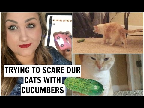 TRYING TO SCARE THE CATS WITH CUCUMBERS!
