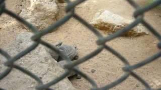 حالة إغتصاب بحديقة الحيوان ( كويت ) لوووووووووووول