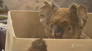 More than 1 billion animals thought to have perished in Australia bushfires