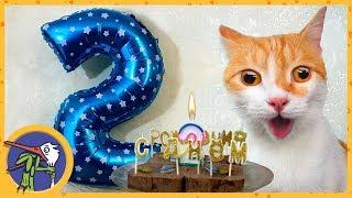 День рождения котика Рыжика - 2 года. Рыжик нализался валерьянки и улетел на шаре