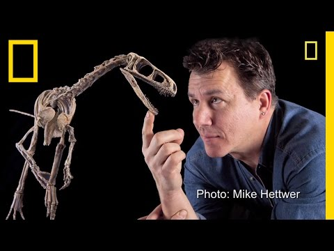 "Fast, ""Nasty"" Little Dinosaur Discovered 