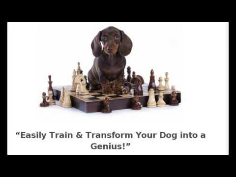 Brain Training 4 Dogs Obedience Training Commands Sale Price