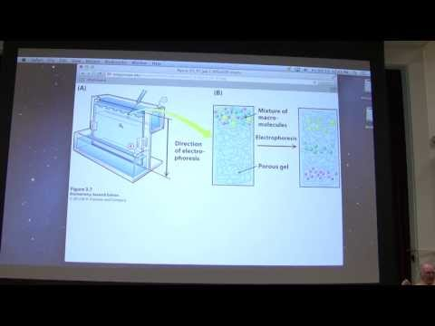 6.  Kevin Ahern's Biochemistry - Protein Purification I
