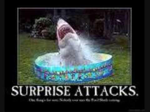 Funny shark pics