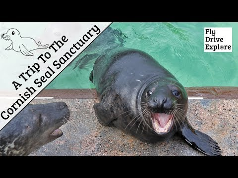 breakfast-with-the-seals-at-the-cornish-seal-sanctuary