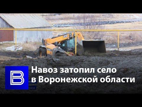 Село в Воронежской области затопило навозом