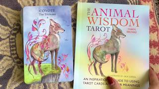 HD Animal Wisdom tarot deck flip through