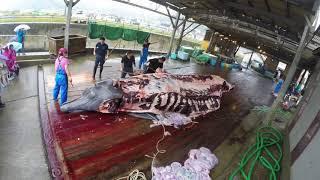 南房総 和田浦 2018年 鯨漁解禁 初鯨解体