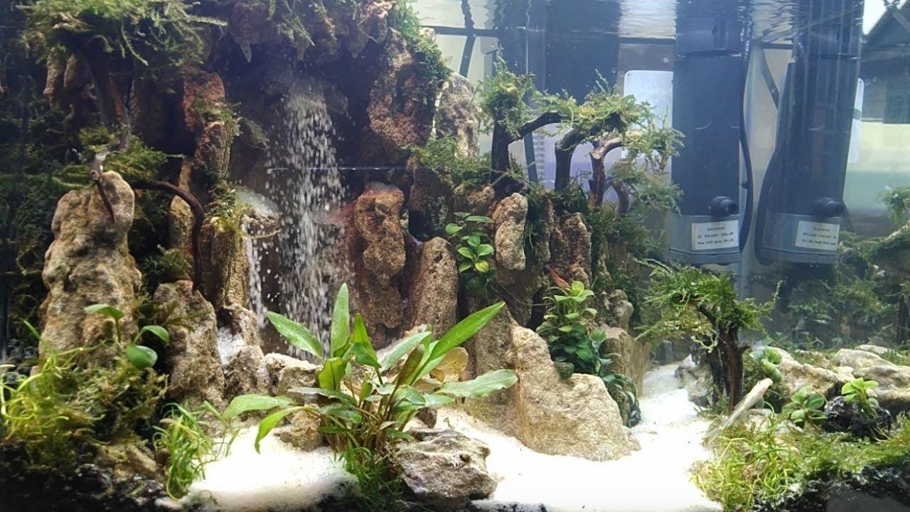 Aquascape Air Tawar Cantik Tema Alam dengan Air Terjun ...