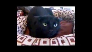 Священник Николай Каров - Черная кошка