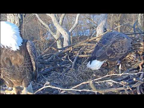 EAGLE CAM 2017 - Breakfast with the Eagles - ECC, MPDC - Washington, DC
