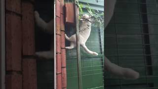 Ninja Cat Fly For Food - Because He Is So Hungry