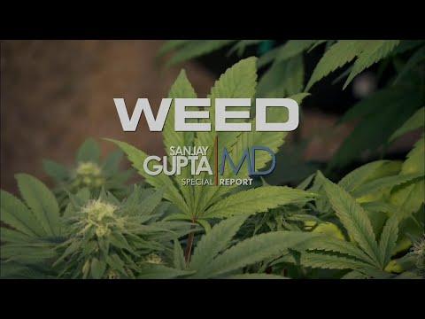 Трава - CNN, Санджей Гупта/WEED Dr Sanjay Gupta (2013) русские субтитры