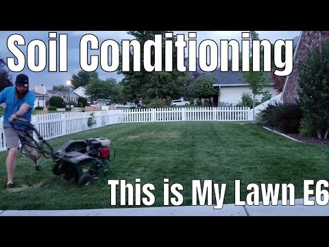 diy-how-to-fix-compact-clay-soil,-shallow-roots,-dog-urine-spots-and-dead-grass.-this-is-my-lawn