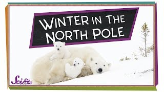Winter at the North Pole!