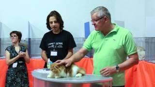 С выставки кошек 26-27 июля 2014 г. Воронеж WCF