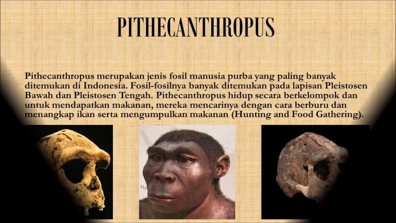 Manusia Purba Pithecantropus Youtube