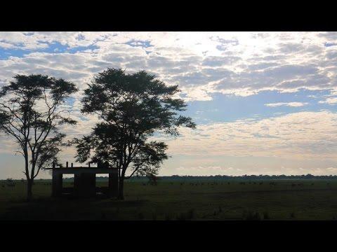 اكبر محمية حيوانية في موزمبيق مهددة بفعل عودة المعارك