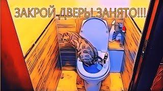 Кот на унитазе. Очередь в туалет :)