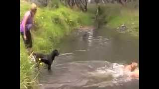 Top Dog Training Tip #3 – Teach Your Puppy To Swim