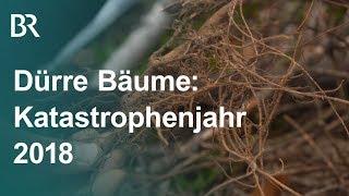 Dürre Bäume: Ein Katastrophenjahr für den Wald | Unser Land | BR Fernsehen