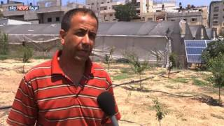 غزة.. تزايد استخدام الطاقة الشمسية بالزراعة