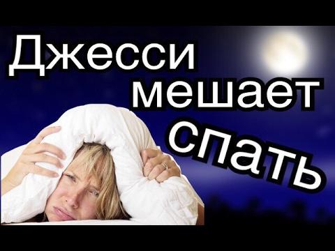 Как приучить хомяка спать ночью
