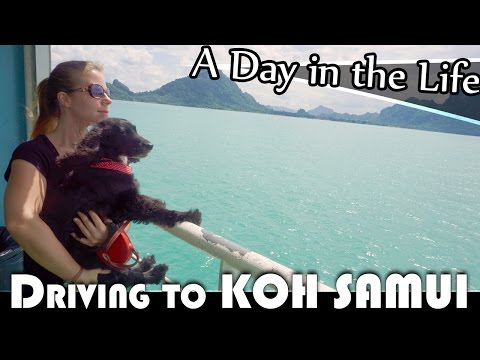 DRIVING TO KOH SAMUI WITH MY DOG- LIVING IN THAILAND DAILY VLOG (ADITL EP187)