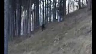 Rottweiler Retrieving