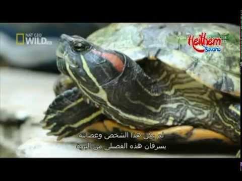 World Weirdest Animals Smugglers - Animal Heaven