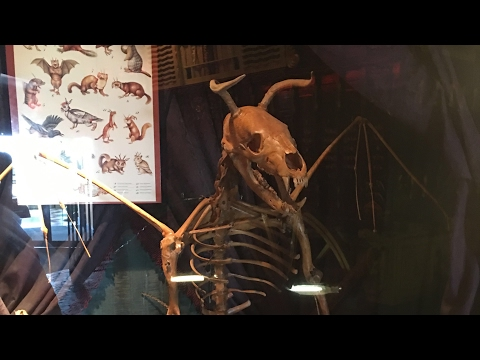 Jersey Devil's Skeleton - Ripley's Atlantic City, NJ