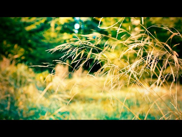 Relaxing Instrumental Music - piano, slow, good energy - relaxdaily N°092