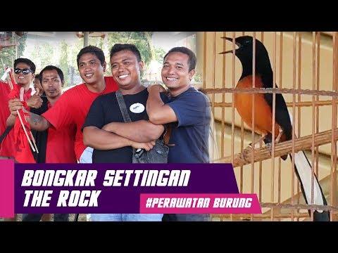 BONGKAR SETTINGAN : Murai Batu THE ROCK Burung Prestasi KELAS ATAS