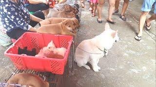 Không thể tin lại có phiên chợ bán chó mèo lớn đến vậy | Pets Market