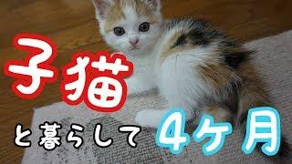 子猫を拾ってから四ヶ月の成長記録 Kittens growth record