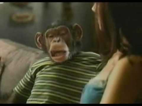 Funny bud light chimp commercial youtube funny bud light chimp commercial aloadofball Choice Image