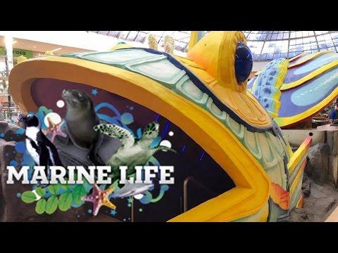 Sea Life Caverns Aquarium West Edmonton Mall Tour & Review