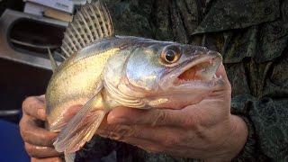 [Школа рыболова] - Ловля осеннего судака (часть 3) - Ловля на малька