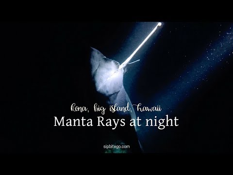 Night snorkeling with the Manta Rays in Kona - Hawaii vacation activities + Big Island things to do