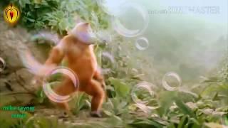 Neue HO-Munda Cartoon video