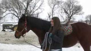How To Ride a Horse -- English Project