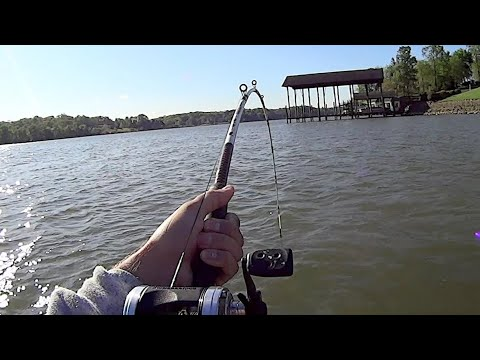 Springtime Fishing For BIG Catfish With Live And Cut Bait
